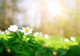 Primavera, tempo das surpresas de Deus!