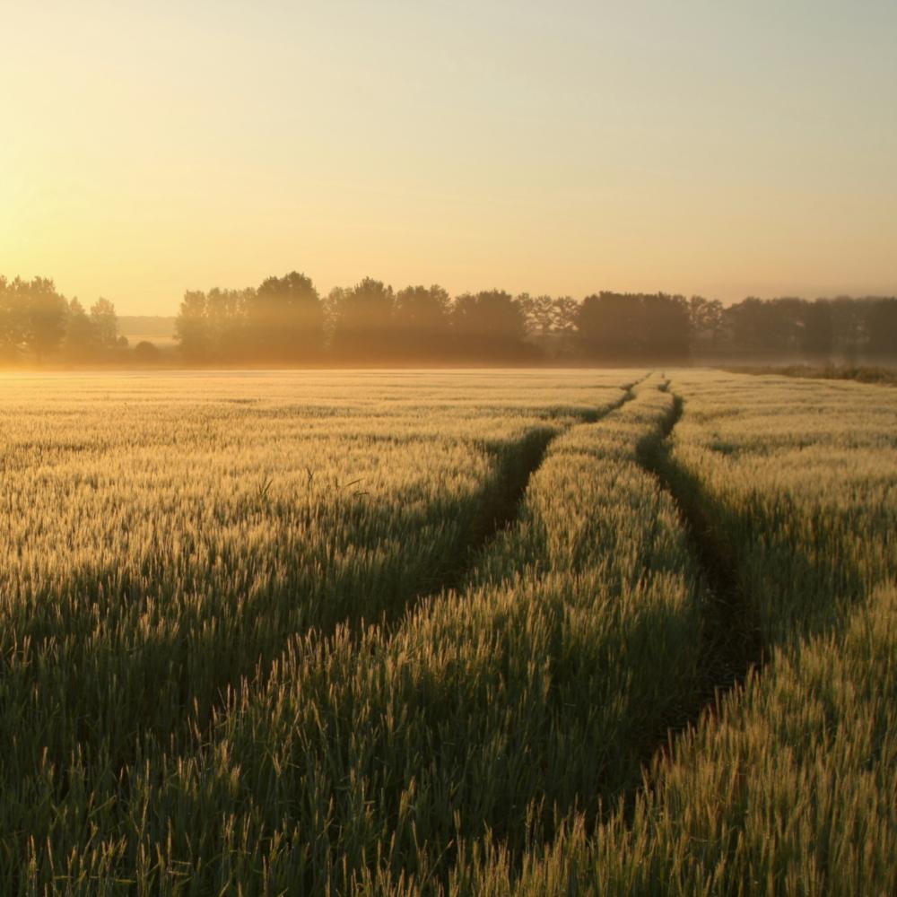 Os riscos da descaracterização da Parceria Rural