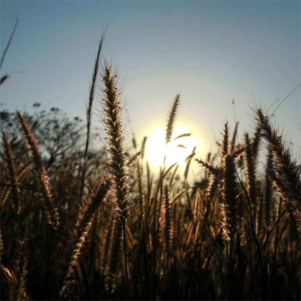 TJRS mantém decisão de nulidade de cláusula não proposta em contrato de seguro agrícola