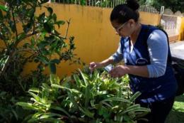 Megaoperação contra dengue vai passar pelo Arroio Grande e Santo Antônio neste sábado