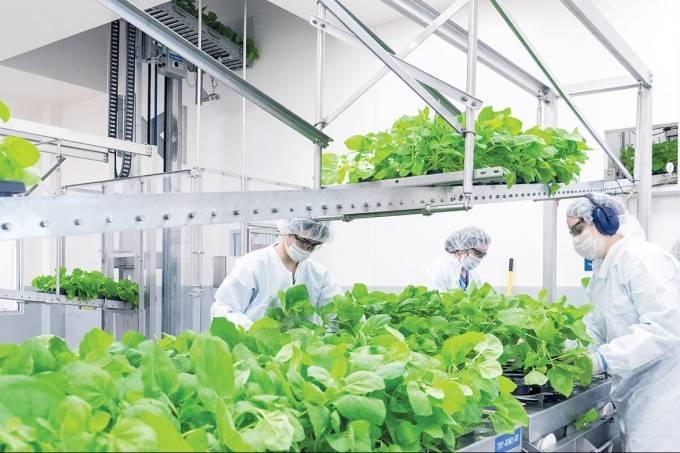 Vacina: empresa canadense produz vacinas com base em plantas